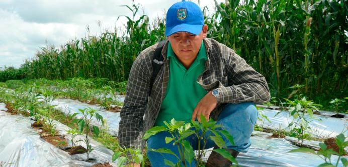 Genç Çiftçilere 30.000 TL Karşılıksız Destek Kredisi