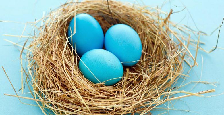 Mavi Yumurta Nedir? Nasıl Üretilir? Nasıl Kazanç Sağlanır?