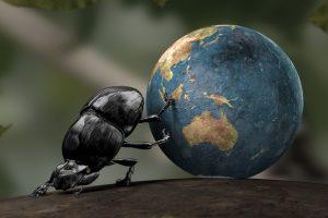 Böcek Yetiştiriciliği İle Para Kazanma ve Böcek Yetiştiriciliği İşi Veren Firmalar