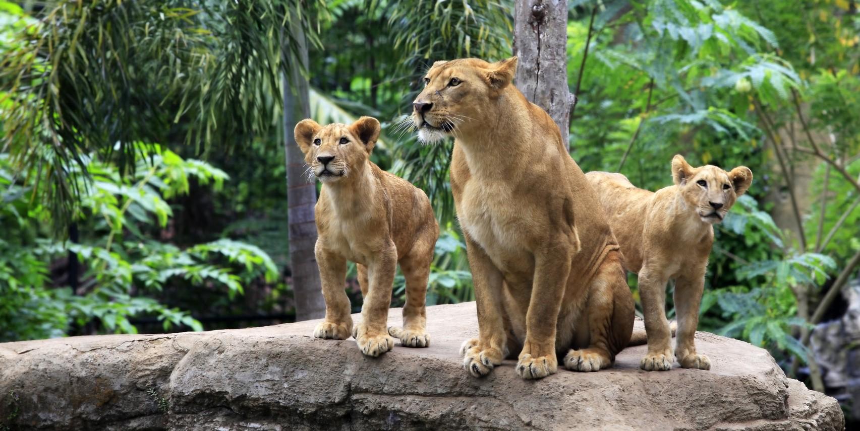 Darıca Hayvanat Bahçesi - Zoo